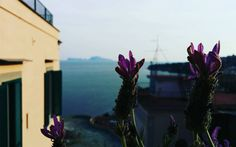 Lavanda  Capri  mare.  #capri #caprisland #capriisland #landscape #sea #napoli #naples #igersnapoli #igersitalia #lavender #lavanda #mare #mareblu