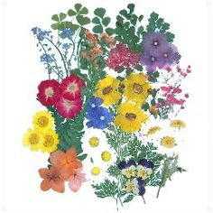 Great selection of pressed flowers for sale.