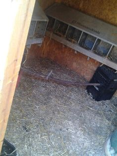 inside  the large chicken house