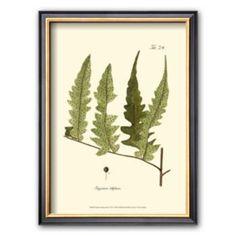 "Art.com ""Small Antique Fern VII"" Framed Art Print"