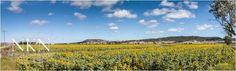 Domain Parked With VentraIP Australia Vineyard, Australia, Landscape, Park, Outdoor, Image, Outdoors, Parks, Vineyard Vines