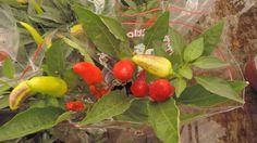 Cordeiro de Freitas - AJCF - Foto em - Central Garden -Uberlândia MG
