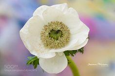 Pure love  by photobybara #nature #photooftheday #amazing #picoftheday