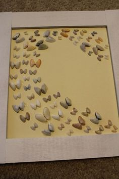 Seashell display idea