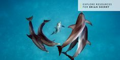 We asked some of the world top underwater photogs for shooting tips. They shared them in the story below, along with some of their best work in this gallery. Brian Skerry shot these spotted dolphins (Stenella frontalis) in the Bahamas. Underwater Photographer, Underwater Photos, Underwater Life, Animals Images, Cute Animals, Wild Animals, Dolphin Family, Dolphin Tours, Oceans Of The World