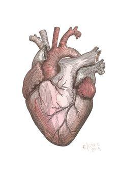 Human Heart Drawing, Human Art, Cool Art Drawings, Drawing Sketches, Wallpaper Corazones, A Level Art Sketchbook, Art Alevel, Bio Art, Octopus Art