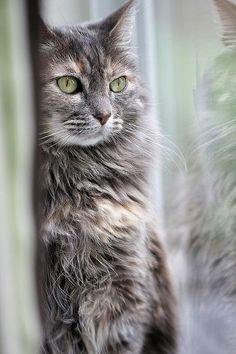 cat eyes ... watchful
