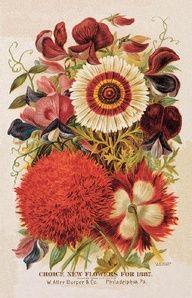 1887 Choice new Flowers