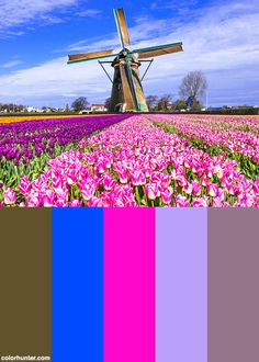 Traditional+Holland+Countryside+-+Windmills+And+Tulips+Color+Scheme