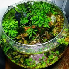 another nice planted bowl
