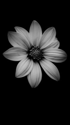Get Best Black Background for Smartphones Today iPhone wallpaper List of Good Black Wallpaper for Smartphones 2019 Flor Iphone Wallpaper, Beste Iphone Wallpaper, Cool Wallpaper, Black And White Wallpaper Iphone, Black Flowers Wallpaper, Dark Background Wallpaper, Android Wallpaper Black, Beautiful Wallpaper, Trendy Wallpaper