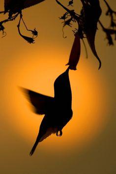 A hummingbird in silhouette, by Yehudi Hernandez