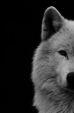 white wolf- would be cool to have the other half two, print both on separate canvases... Just an idea :)