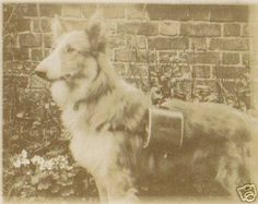 Police dog very late 1800s, or very, very early 1900s. Look very closely at the smudged -- it says Police.