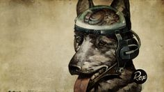 Amazing Fallout Quote Dog Look Download Image Wallpaper