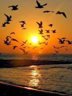 1,000,000 Amazing & Beautiful Photos ♥♥♥