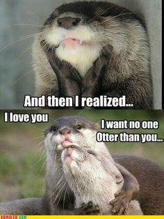 otter love my otter half otters love meme speazoqcd pttqwi suhsaq yxoomttv Cute Funny Animals, Funny Animal Pictures, Cute Baby Animals, Wild Animals, Animal Pics, Funny Images, Otters Cute, Baby Otters, Otters Funny