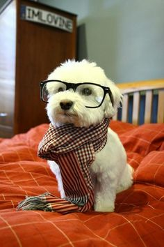 adorable...are those my glasses?