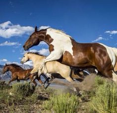.wild horse stallion mustang picture, selected as the 5th most beautiful here                                                                                                                                                     More