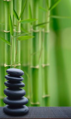 Zen Take a moment to get away from modern life. Reflect. It's a world worth saving. Live green