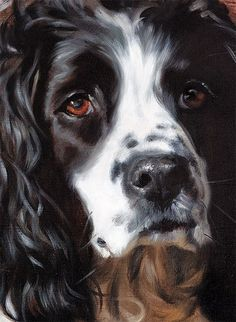 DOG ARTIST - BLACK SPRINGER SPANIEL - Hazel Morgan I normally don't post art, only photos on this board but this is a beautiful painting!