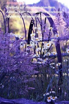 All that is lilac, violet, purple, mauve, magenta. Join to Purple world community and share your favourite pictures wtih us.