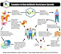 Example of spread of antibiotic resistance from farms to humans.