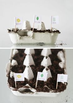 Recycled Garden from egg cartons! :) #recycle #repurposed #gardening