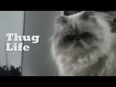 Why Does My Cat Keep Knocking Things Over? Learn why over at CatTime.com!