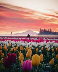 Jake Egbert Captures The Beauty at The Wooden Shoe Tulip Festival in Oregon - Tulpen Beautiful World, Beautiful Places, Beautiful Pictures, Landscape Photography, Nature Photography, Photography Tricks, Digital Photography, Tulip Festival, Tulip Fields