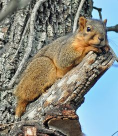 Secret Squirrel, Cute Squirrel, Baby Squirrel, Animals And Pets, Funny Animals, Cute Animals, Woodland Creatures, Cute Creatures, Funny Animal Pictures