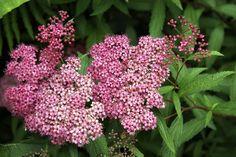 Garden Shrubs, Trees And Shrubs, September, Outdoors, Gardening, Outdoor, Lawn And Garden, Outdoor Rooms, Off Grid