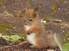 Shy little squirrel