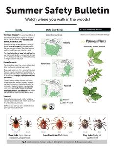 Deer Ticks, Summer Safety, Poisonous Plants, Camping Organization, Walk In The Woods, Poison Ivy, Teas, Verona, Cleaning Tips