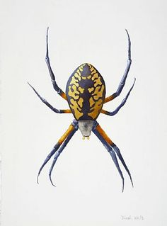 Garden Spider-garden spider, arachnid, argiopebyDinahWells