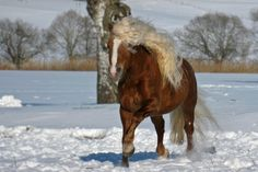 horse blog w/ great horse photos!