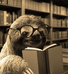 Well if the sloth is reading...maybe we will read too! I wonder what a sloths book of choice may be?