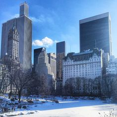 icy Pond, Central Park #nyc by @alexandrabloom