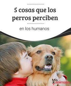 5 cosas que los perros perciben en los humanos Soledad, felicidad, estrés. Los perros pueden percibir de los humanos alguno de estos estados de ánimo. ¿Lo sabías? En este post te damos algunos detalles. #ánimo #percibir #perros #curiosidades