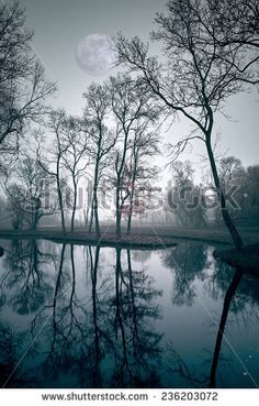 Find Night Winter Scene stock images in HD and millions of other royalty-free stock photos, illustrations and vectors in the Shutterstock collection. Thousands of new, high-quality pictures added every day. Winter Scenes, Cover Design, Photo Editing, Royalty Free Stock Photos, Night, Book, Illustration, Pictures, Outdoor