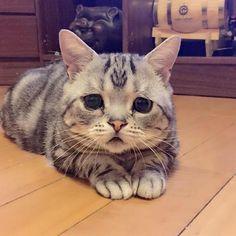 【画像】 世界一の困り顔をもつ猫現る