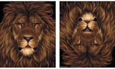 Leeuw - Konijn