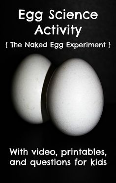 Egg science experime