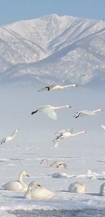 White ~ flight
