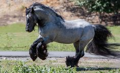 21 Horses With The Most Beautiful & Rare Colors In The World – Page 4 of 21