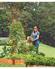 stacking tomato ladders from gardeners supply