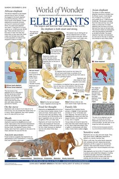 For December 2018 All About Animals, Animals Of The World, Animals And Pets, Elephant World, Asian Elephant, Zoo Signage, Todays Comics, General Knowledge Facts, Animal Facts