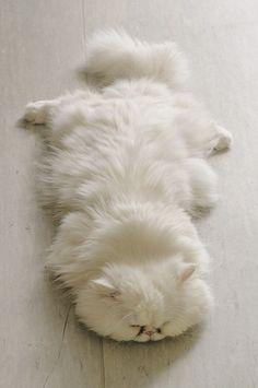 sleeping cat by JustLinnea