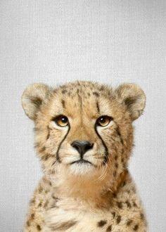 Cheetah - Colorful Art Print by Gal Design - X-Small Framed Art Prints, Poster Prints, Canvas Prints, Baby Animals, Cute Animals, Colorful Animals, Wild Animals, Cheetahs, Colorful Pillows