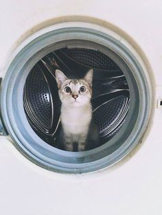 dry clean only cat